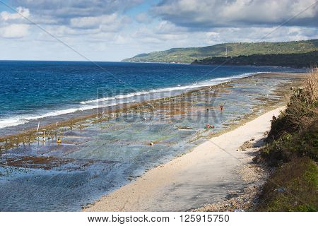 Seaweed Algae Plantation
