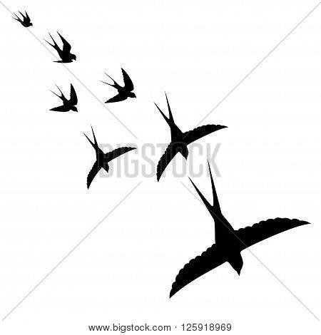 flying birds on white background vecto illustration