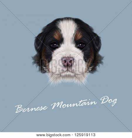 Cute fluffy face of tricolor domestic dog on blue background.