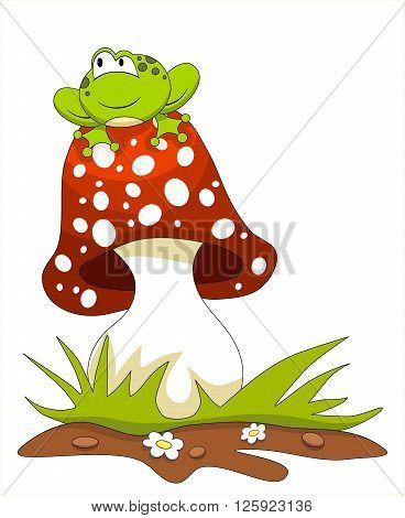 Frog sitting on a mushroom. Isolated on white
