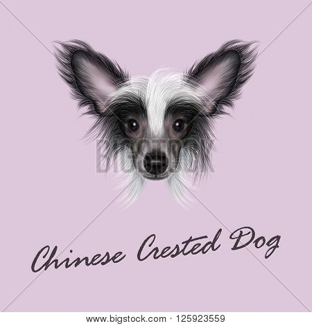 Cute face of wonderful bicolor domestic dog on pink background.
