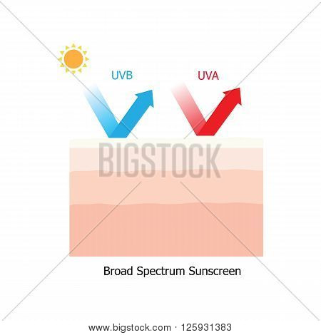Skin with UVA and UVB protection which has broad spectrum sunscreen product