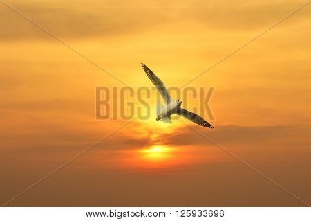 Seagull flying in the sunset above the sea Freedom concept
