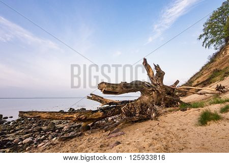 Trunk on shore of the Baltic Sea.