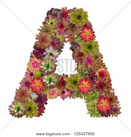 letter A made from bromeliad flowers isolated on white background