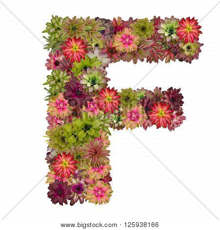 letter F made from bromeliad flowers isolated on white background