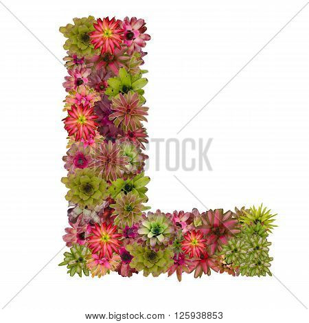 letter L made from bromeliad flowers isolated on white background