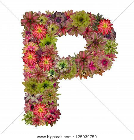 letter P made from bromeliad flowers isolated on white background