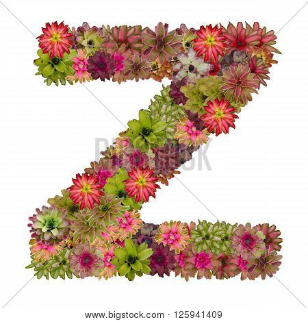 letter Z made from bromeliad flowers isolated on white background