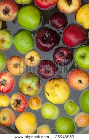 Natural, imperfect looking apples floating in water