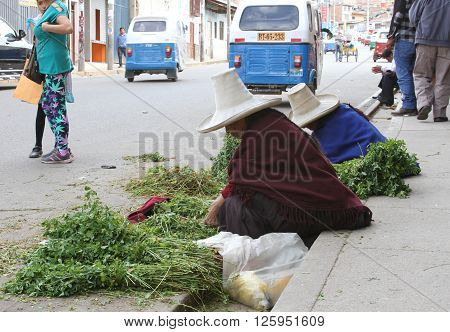 Cajamarca Peru - April 10 2016: Two Sierra women wearing sombreros and ponchos sell alfalfa for guinea pigs on the street of Cajamarca Peru on April 10 2016