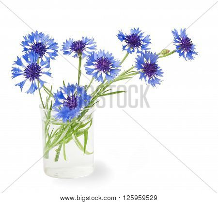 bouquet of cornflowers in a vase on a white background