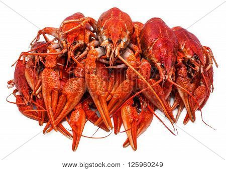 Fresh juicy boiled crawfish closeup. seafood healthy food.