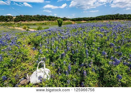 Kids Purse And Shoes In Field Of Texas Bluebonnet Wildflowers On River