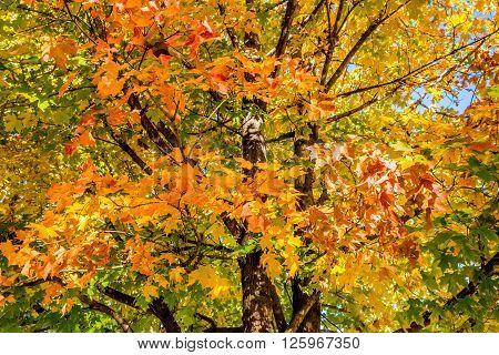 Peaceful Autumn Trees with Brilliant Orange Fall Foliage in Oklahoma Park