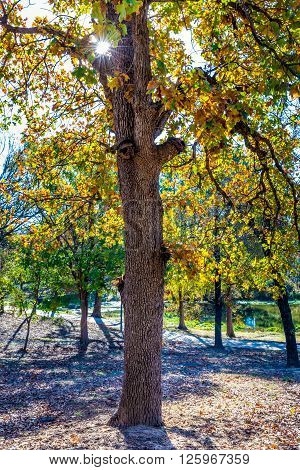 Peaceful Autumn Trees with Fall Foliage Lit by Morning Sun in Oklahoma Park