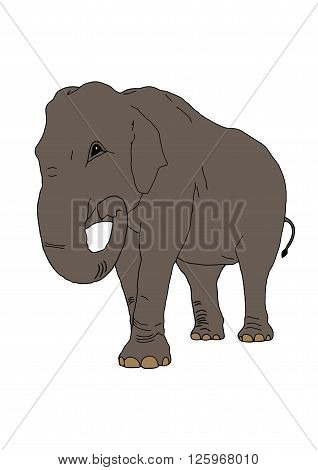 The vector elephant on the isolated background