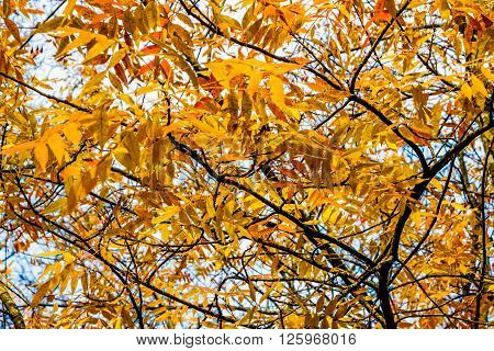 Autumn Trees In Oklahoma