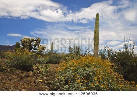 Deserto em flor