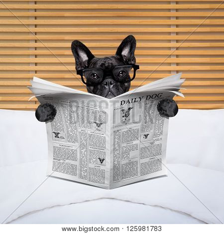 Dog Newspaper In Bed