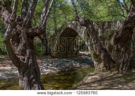 Tzelefos Picturesque Medieval Bridge in Troodos, Cyprus surrounded by old forest trees