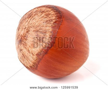 one brown hazelnuts isolated on white background close-up macro.