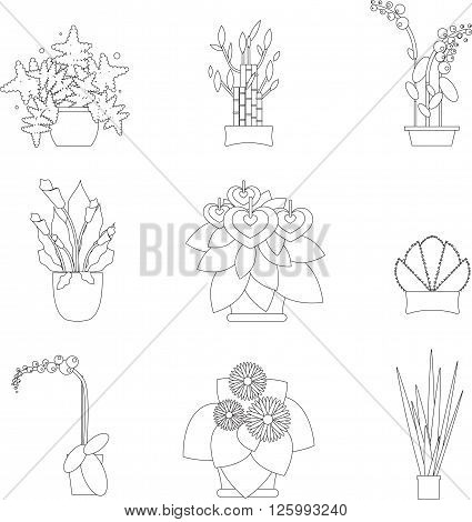 Illustration of a Greenhouse Housing Different Types of Plants. Greenhose with home plant. Potted houseplants for greenhouse. Elements for greenhouse. Tropical plants and trees for greengouse.