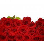 stock photo of red rose  - Beautiful Red Roses - JPG
