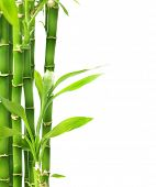 stock photo of bamboo  - Bamboo isolated on white - JPG