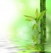 picture of bamboo  - Zen Bamboo - JPG