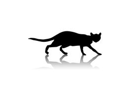 foto of black cat  - cat black silhouette with shadow pet nature domestic - JPG