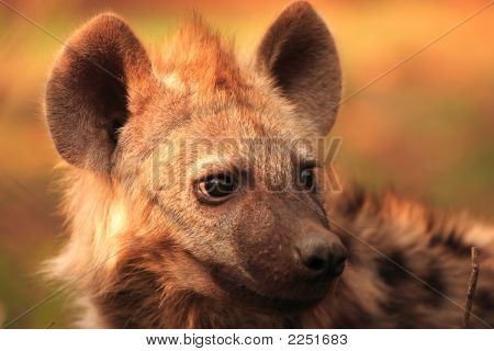 Hyena Youngster Portrait