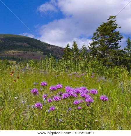Wild Flowers On Mountain