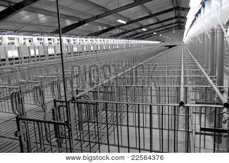 Modern Breeding Pig Farm