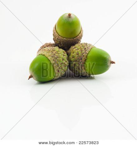 Three Green Acorns