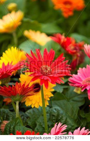 Colorful spring season flowers