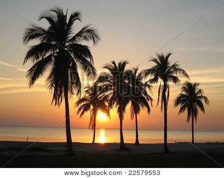 Sunset On A Beach With Palms In Cuba