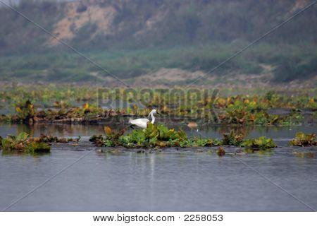 White River Bird