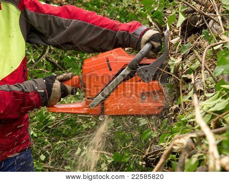 Forester at work with chain saw