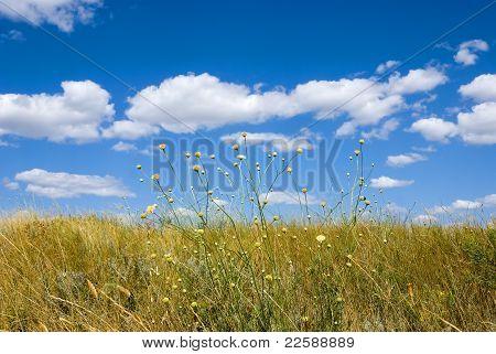 Summer Steppe