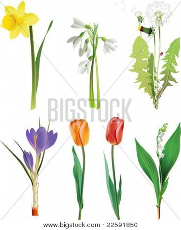 Set of spring flowers. All elements and textures are individual objects. Vector illustration scale to any size.