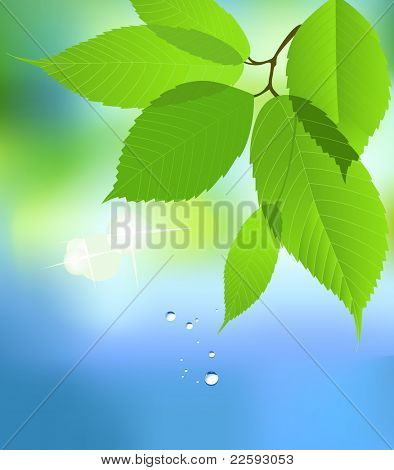 Leaf with Water Drop. Raster version of vector illustration.