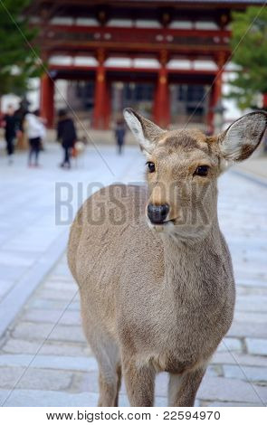 A deer in front of the temple