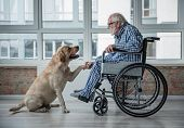 Peaceful Old Man Looking At His Hound And Holding The Paw Of It. Tranquil Man Is Sitting In Wheelcha poster