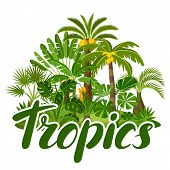 Card With Tropical Palm Trees. Exotic Tropical Plants Illustration Of Jungle Nature. poster