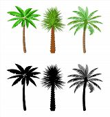 Tropical Green Palm Set. Jungle Leaves. Coconut Palm, Monstera, Fan Palm, Rhapis. Natural Leaf, Exot poster