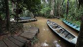 The Rainforest Wharf On Sandoval Lake Near Puerto Maldonado And Madre De Dios River, Amazon Peru poster