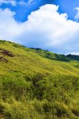Lush Green Field Taken At A Rural Plain Taken In Rural Oahu Hawaii poster