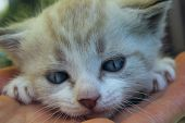 Cropped Shot Of Cute Little Kitten With Blue Eyes. Cat.kitten, Close Up. poster
