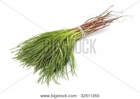 Bunch of fresh Saltwort on white background